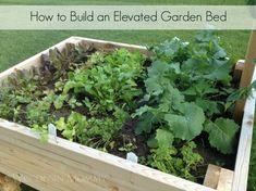 How to build an elevated garden bed. #gardening #DIY