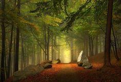 Enchanted Forest, Bavaria, Germany