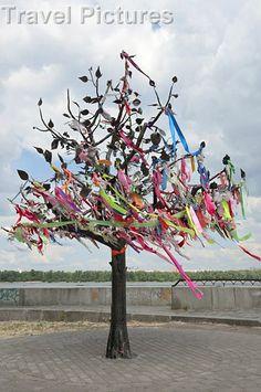 size: Photographic Print: Wish Tree, Kiev Poster by Graham Lawrence : Artists Tree Artwork, Framed Artwork, Outdoor Crafts, Beltane, Beach Landscape, Summer Solstice, Botanical Art, Daffodils, Find Art