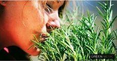 Самая мощная трава для мозгового кровообращения, сердца, сосудов, надпочечников, суставов, кожи, волос и не только! — green medic - be1issimo.ru