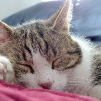 #dogalize Influenza nel gatto: cause, sintomi e terapia #dogs #cats #pets
