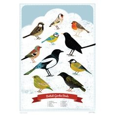 An A2 size poster detailing 10 british garden birds. Perfect for children starting to spot birds, or for adults who simply love illustrations of birds!£2 per poster is being donated to the RSPB Scotland.Posters are lithographically printed onto 100% recycled 170 gsm uncoated paper.FSC approved paper stock.