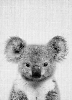 Print 67 by Lila x Lola as Poster Cute Baby Animals, Animals And Pets, Funny Animals, Wild Animals, Beautiful Creatures, Animals Beautiful, Koala Baby, Baby Otters, Arte Do Kawaii