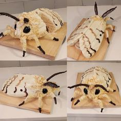 "937 mentions J'aime, 19 commentaires - Katherine Dey (@katherine.dey) sur Instagram : ""Gypsy moth cake! I have been seeing these buggers and their eggs all over our woods lately. #cake…"" La Danse Macabre, Moth, Food Porn, Goodies, Christmas Ornaments, Baking, Holiday Decor, Ethnic Recipes, September 22"