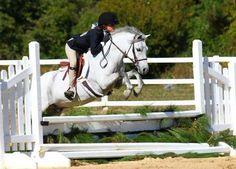 Eddie-Set-Go! - Welsh Pony - Hunter