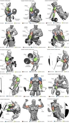 Bicep Workout Routine, Back And Bicep Workout, Bicep And Tricep Workout, Gym Workout Chart, Gym Workout Tips, Shoulder Workout, Workout Planner, Training Workouts, Training Plan