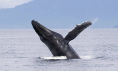 image for Up to 50% Off Whale-Watching and Nature Cruise