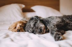 Should You Let Your Dog Sleep in the Bed - Pets Global Dog Sleeping Positions, Sleeping Dogs, Dog Friendly Accommodation, Dog Breeds List, Education Canine, Easiest Dogs To Train, Dog Anxiety, Old Dogs, Dog Training Tips