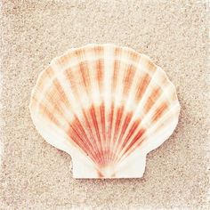 Beach Photo Set - Six Photographs - beige neutral cream white seashells photography ocean sea shells coastal wall art print Scallop Shells, Coastal Wall Art, Shell Art, Beach Photography, Photography Ideas, Abstract Canvas, Beach Photos, Sea Shells, Canvas Prints
