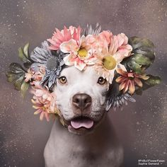These Pit Bulls Wearing Flower Crowns Will Melt Your Heart