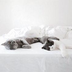 Pets so Cute Pretty Cats, Cute Cats, Funny Cats, Crazy Cat Lady, Crazy Cats, Animals And Pets, Cute Animals, Cute Creatures, Cat Life