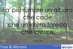 Fa' più rumore un albero che cade che un'intera foresta...