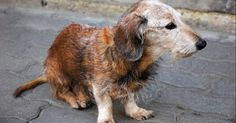 Salvemos a todos los animales abandonados en la calle FIRMA Y COMPARTE ESTA PETICIÓN AHORA!