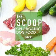Choosing the Right Dog Food — Organic or Not: We take a look at the ins & outs of organic pet food. http://www.darwinspet.com/resources/organic-dog-food/ #organic #wholefood #realfood #freshfood #darwinspetfood #healthypets #naturalpetfood #darwinsnatural
