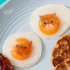 A Russian Artist Photoshops Pics Of Food With Cats And The Results Are Stunning! - Cat Food - Ideas of Cat Food Funny Cat Fails, Funny Cats And Dogs, Funny Cat Memes, Funny Cat Videos, Cats And Kittens, Cute Cats, Funny Animals, Cute Animals, Wild Animals