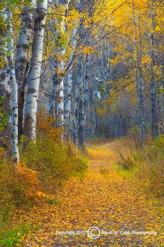 Autumn trail (Methow Valley Washington) by David Cobb. Relax with these backyard landscaping ideas and landscape design. Landscape Photos, Landscape Paintings, Landscape Photography, Nature Photography, Landscape Design, Beautiful Places, Beautiful Pictures, Concours Photo, Autumn Scenes