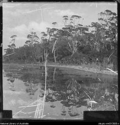 Four people standing on the bank of a river, Gippsland, Victoria, ca. 1900 [transparency]
