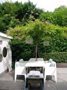 salon de jardin pas cher, plante verte dans le jardin, deco jardin