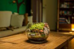 Terariu plante, decoratiune plante naturale Terrarium, Home Decor, Plant, Terrariums, Decoration Home, Room Decor, Home Interior Design, Home Decoration, Interior Design