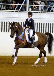 Mai- Grand Prix, Danish Warmblood mare
