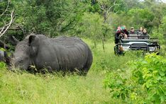 Best 5 Day Kruger National Park Safaris - Award Winning Luxury Packages are our most popular Luxury Safari Packages. Operated from our very popular luxury tented camp which is situated near to the Sabi Sand and Kruger Park Kruger National Park Safari, National Parks, Sand Game, Private Games, Luxury Tents, Luxury Packaging, Game Reserve, Bird Species, Wildlife