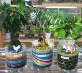グラスハウスのワンルーム工房 「サンドアートの観葉植物」 観葉植物とサンドアートのコラボレーションをお楽しみ下さい!