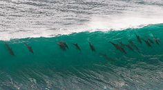 Imágenes de Delfines: fabulosa fotografia delfines nadando en una ola   08-12-2014