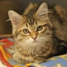 Ziva has found her forever home!