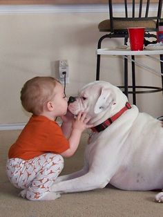Ok I am done! I can't pick which is cuter....the kid or the Boxer? Mais #whiteboxerdogs