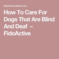 How To Care For Dogs That Are Blind And Deaf – FidoActive