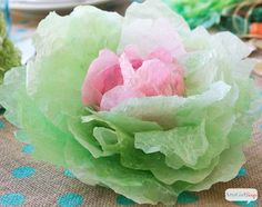 Coffee Filter Cabbages