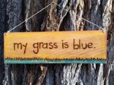 What color is your grass? Ours is BLUE! #bluegrass