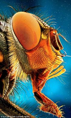 Magnified images which make creepy crawlies look like dinosaurs | Daily Mail Online