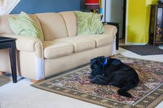 Fleas can be a nuisance that attack your pets and can quickly move in and pollute your living quarters as well.