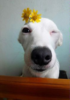 Conheça o cachorro sorridente da Tailândia: Euro.