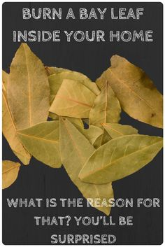 BURN A BAY LEAF INSIDE YOUR HOME, WHAT IS THE REASON FOR THAT? YOU'LL BE SURPRISED