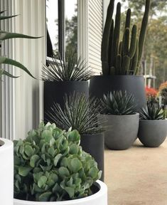 "The Balcony Garden on Instagram: ""How does one create the perfect pot cluster? Head over to our blog where Paul Takchi from @exotic_nurseries shares some advice. Link in…"" Balcony Garden, Cactus Plants, Potted Plants, Greenery, Exotic, Instagram, Planter Pots, Nurseries, Outdoor Gardens"