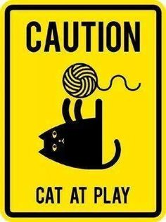 Caution ~ Cat at Play ♥