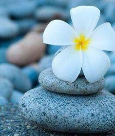 The Paleo Diet: Modified Exotic Flowers, Beautiful Flowers, Hibiscus, Tiare Tahiti, Phone Screen Wallpaper, Flower Wallpaper, Lotus Wallpaper, Beautiful Wallpaper, Backrounds