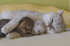 Too sweet!! I want my kitties to be like this one day :)