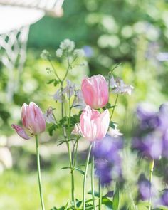 Prairie Charm: When everything blooms ~ Keď všetko kvitne Lavender Garden, Pink Garden, Summer Garden, Happy Spring, Spring Time, Country Cottage Garden, Bokeh Photography, Seasons Of The Year, Spring Blossom