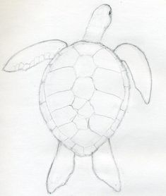 By a weak pencil line, draw the outline of scutes – those are large, scale-like structures on top of the turtle's shell. Description from jus4kidz.blogspot.com. I searched for this on bing.com/images
