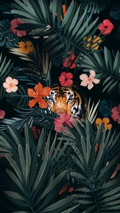 Tiger Hiding iPhone Wallpaper - iPhone Wallpapers