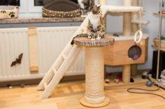 ber ideen zu kratzbaum selber bauen auf pinterest katzenbabys kaufen kratzbaum holz. Black Bedroom Furniture Sets. Home Design Ideas