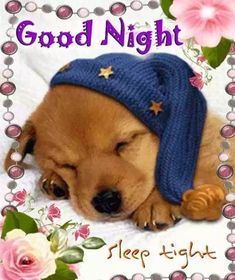 """Good Night Quotes and Good Night Images Good night blessings """"Good night, good night! Parting is such sweet sorrow, that I shall say good night till it is tomorrow."""" Amazing Good Night Love Quotes & Sayings Good Night Funny, Good Night Sleep Tight, Good Night Friends, Good Night Gif, Good Night Wishes, Good Night Sweet Dreams, Good Night Quotes, Good Night Images Cute, Good Night Cards"""