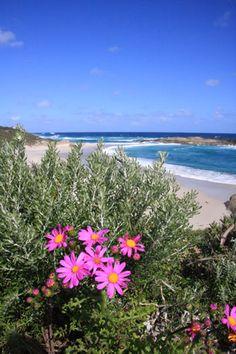 Wildflowers at Lights Beach Denmark, Western Australia along the Bibbulmun Track