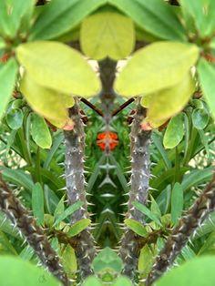 le mexicain créature étrange fleur flower nature plante verte botanique composition portrait fantastique surnaturel personnage imaginaire apparition mystérieux monstre caricature