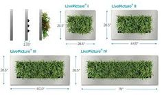 The Suite Plants LivePicture wall planter is living art for your walls.