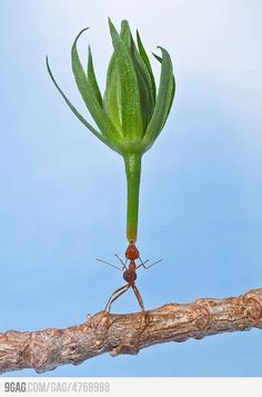 balancing act by strong ant...  Holy cow what a shot !!