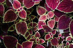 201512-yernju-ludek-wellart-leaf-purple-green